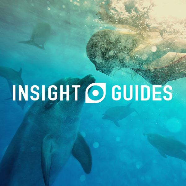 Insight Guides Case-Study